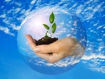 Mão com a planta na esfera com céu e nuvens Imagens de Stock Royalty Free