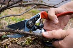 Mão com tesoura de podar manual do jardim imagem de stock royalty free
