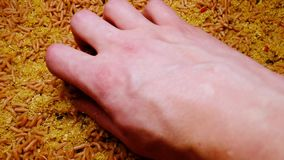 Mão com um punhado das larvas brancas uma grande pilha dos sem-fins Pescando a atração video estoque