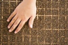 Mão cultive da semente da alface fotos de stock royalty free