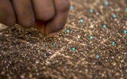 Mão cultive da semente da alface fotografia de stock