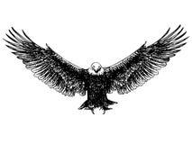 Mão da águia do voo tirada Imagem de Stock