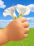 Mão da criança com flores Fotos de Stock Royalty Free