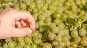 A mão da criança prova um grupo de uvas em um mercado foto de stock