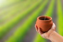 Mão da criança que guarda a planta nova em pasta sobre o fundo da natureza Imagens de Stock