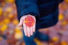A mão da criança que guarda uma folha da árvore na queda Fotos de Stock Royalty Free