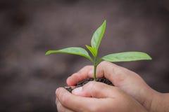 A mão da criança que guarda uma plântula pequena, planta uma árvore, reduz o aquecimento global, dia de ambiente de mundo foto de stock royalty free