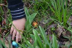A mão da criança que pegara ovos da páscoa fotos de stock royalty free