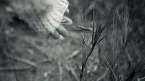 A mão da criança toca na grama Fotografia de Stock Royalty Free