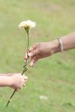 Mão da flor da terra arrendada do mum & da menina fotografia de stock royalty free
