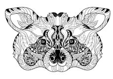 Mão da garatuja da cabeça do guaxinim de Zentangle tirada Ilustração Royalty Free