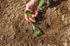 Mão da jovem mulher que mantém a planta da plântula apenas plantada na GR fotos de stock royalty free