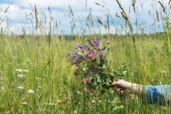 Mão da menina com o ramalhete de wildflowers bonitos no fundo do prado do verão Conceito das estações, ambiental e Imagens de Stock Royalty Free