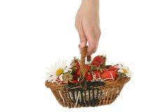 Mão da mulher, cesta de vime das morangos Foto de Stock