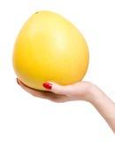 Mão da mulher com citrinos tropicais foto de stock royalty free