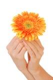 Mão da mulher com flor bonita Fotografia de Stock Royalty Free