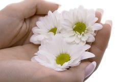 Mão da mulher com flores imagem de stock royalty free