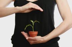 Mão da mulher com planta Imagens de Stock