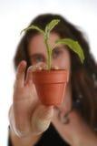 Mão da mulher com planta Foto de Stock