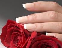 Mão da mulher com rosas vermelhas fotografia de stock royalty free