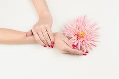 Mão da mulher da beleza com flor cor-de-rosa fotos de stock royalty free