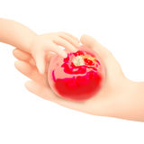 Mão da mulher e do bebê que guarda a maçã vermelha Isolado em um backg branco fotografia de stock royalty free