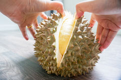a mão da mulher está descascando o durian Imagem de Stock