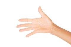 Mão da mulher (palma) foto de stock royalty free