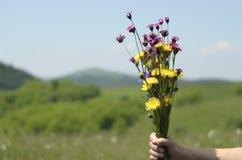 Mão da mulher que guarda flores na natureza Foto de Stock Royalty Free