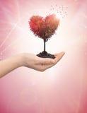 A mão da mulher que guardara um coração da árvore imagem de stock