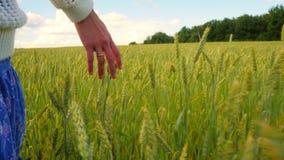 A mão da mulher toca na grama no campo durante o dia ensolarado, movimento lento video estoque
