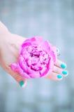 Mão da peônia Foto de Stock