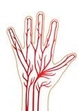 Mão da pessoa isolada no fundo branco ilustração stock