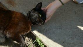 Mão da pessoa que afaga o gato preto macio da cabeça Amor aos animais video estoque