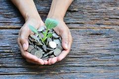 Mão da pessoa que guarda a árvore e as moedas no backgroun de madeira velho da casca Foto de Stock Royalty Free