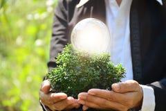 Mão da pessoa que guarda a ampola e a árvore para a ideia ou o sucesso o Foto de Stock Royalty Free