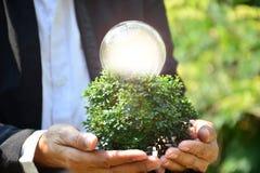 Mão da pessoa que guarda a ampola e a árvore para a ideia ou o sucesso o Foto de Stock
