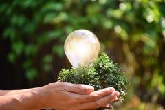 Mão da pessoa que guarda a ampola e a árvore para a ideia ou o sucesso o Imagens de Stock