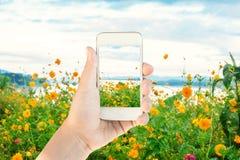 A mão das mulheres toma paisagens de uma natureza pelo smartphone Imagens de Stock