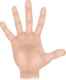 Mão das partes do corpo Imagem de Stock