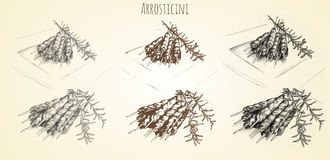 Mão de Arrosticini tirada Imagens de Stock Royalty Free