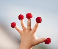 Mão de criança pequena com framboesas Fotografia de Stock Royalty Free