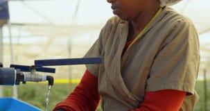 Mão de limpeza do trabalhador na exploração agrícola 4k do mirtilo video estoque