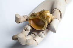 A mão de madeira guarda uma concha do mar fotografia de stock