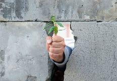 A m?o de um homem, apertou em um punho, rupturas atrav?s de uma parede de blocos de cimento cinzentos e libera um broto verde nov imagem de stock royalty free