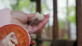 A mão de uma mulher põe a carne de porco, os tomates e as cebolas sobre um espeto chapeado cromo da grade filme