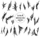 Mão decorativa sob a forma dos ramos do abeto ilustração royalty free