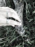 Mão do cão fotografia de stock