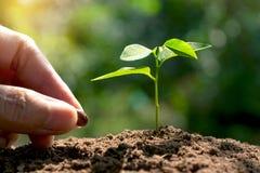 Mão do cultivo das mulheres com planta nova e semente no morni imagens de stock royalty free