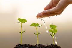 A mão do fazendeiro que molha uma planta nova imagens de stock royalty free
